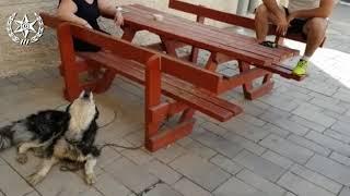 行方不明だったハスキー犬、その歌声で無事確保(イスラエル)