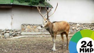 Запутавшийся в гамаке олень стал звездой соцсетей - МИР 24