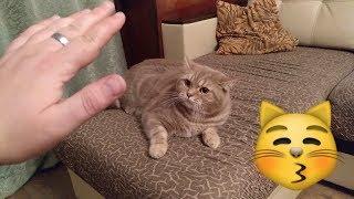 Кот говорит Я тебя НЕ ЛЮБЛЮ. Самое НЕ милое видео