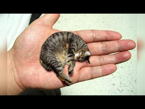 SMALLEST CAT BREEDS IN THE WORLD!