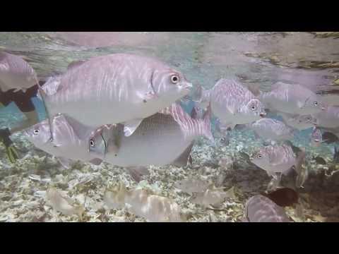 Belize 2017 Belize Marine TREC short version 1080p