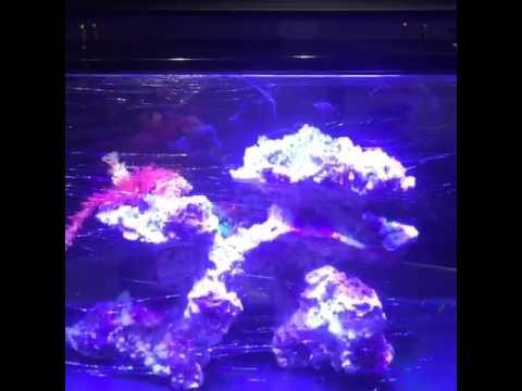 Aquarium LED Lighting - Marine - LT Brand model LS-A008