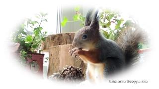 Задачки для белочек. № 1 Exercise for squirrels. №1
