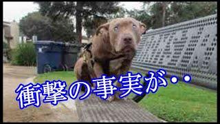 【切ない】「ここはどこ・・・。」ベンチの上で動けない犬。悲しすぎる過去を抱えた犬は、幸せになれたのか・・・。【許せない話】