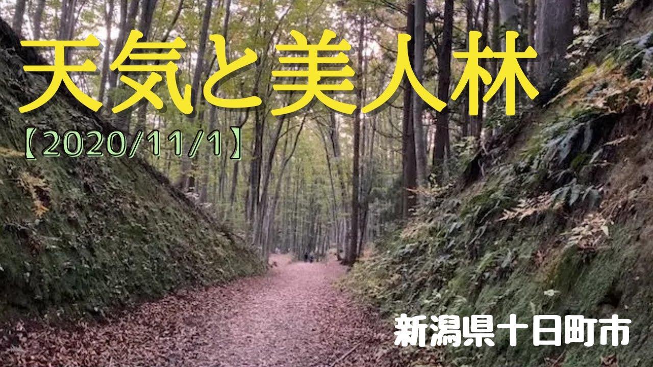 市 天気 十日町 新潟県十日町市の天気|マピオン天気予報