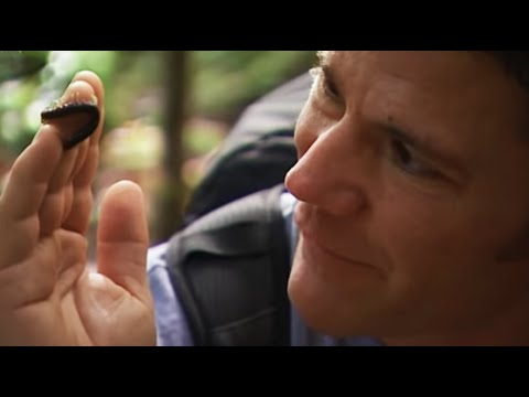 Lethal encounter with killer centipede  Deadly 60   BBC