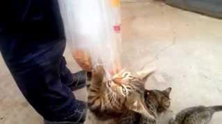 кошки не промах-на ходу подмётки рвут!!!