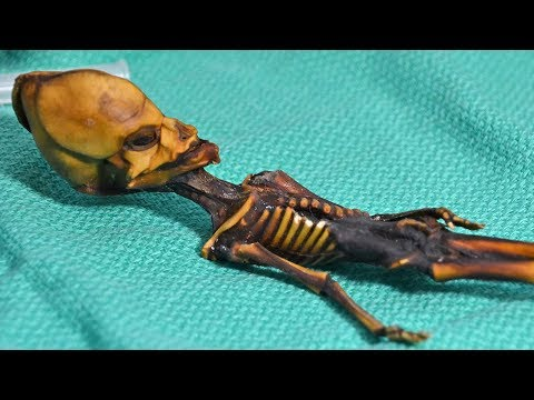 Bizarre Fossils Science Still Hasn't Explained