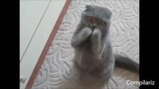 РУССКИЕ ПРИКОЛЫ 2016 Смешные Видео Лучшие Видео Приколы || Funny Videos