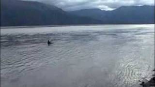 surfing the bore tide in alaska