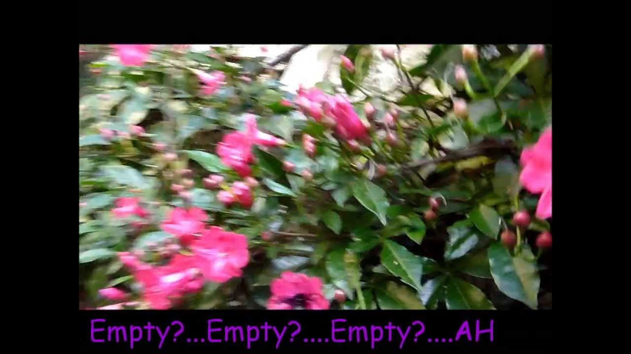 Pink Panther Flowers In Sao Paulo Youtube