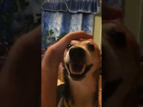 Собака говорит ля ля ля ля ля
