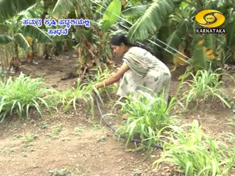 Organic Farming in Gokak Kalliguddi