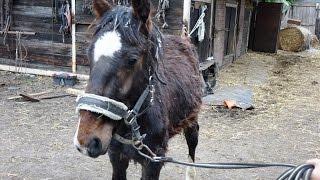 Interwencja Pogotowia dla Zwierząt w sprawie 14 koni we Wrocławiu
