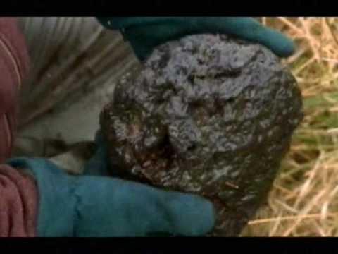 Making History - Bog Iron