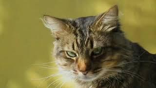 3  curiosidades sobre gatos que você provavelmente não sabia