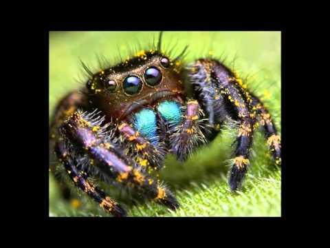 Кліп Балабама - Мой лучший друг - виктор-паук