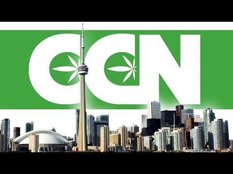 Cannabis Culture News LIVE: Toronto Stirs The Pot