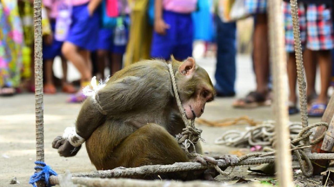 Foto de animales monos 3