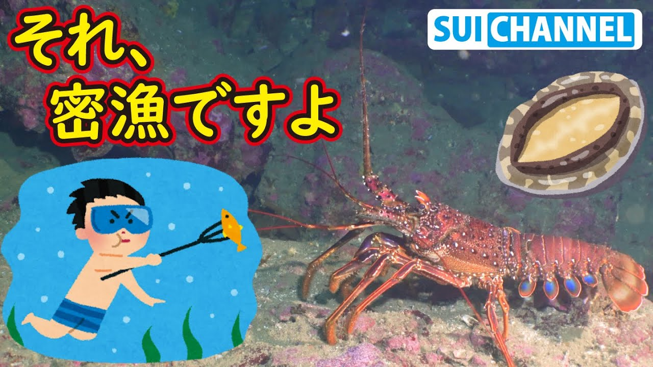罰金3000万円!密漁すれば人生が終わる生き物たち!