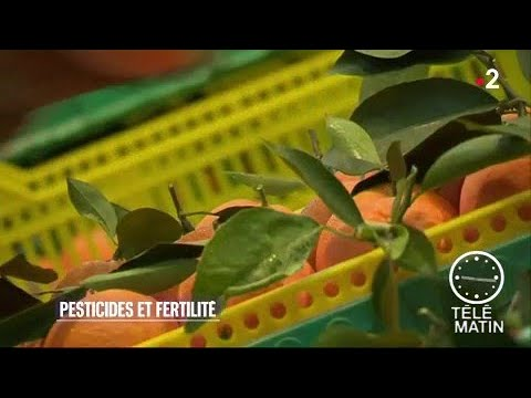 sant fertilit des femmes attention aux pesticides des fruits et l gumes youtube. Black Bedroom Furniture Sets. Home Design Ideas