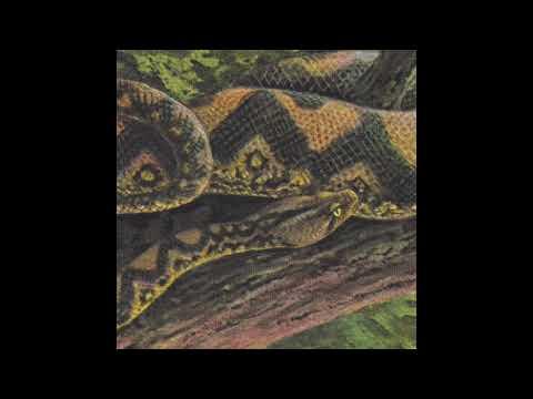 Rainforest Spiritual Enslavement  Ambient Black Magic HOS498