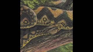 Rainforest Spiritual Enslavement - Ambient Black Magic [HOS-498]