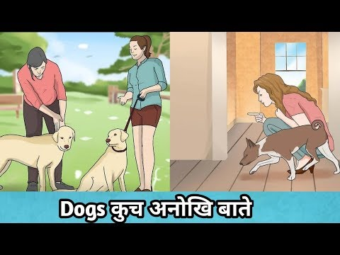 Useful clues to understand your dog better / in hindi / Dogs Body Language