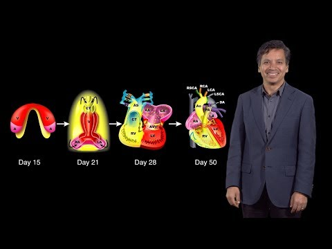 Bench to Bedside: A Change of Heart, pt.1 - Embryonic Heart Development - Deepak Srivastava