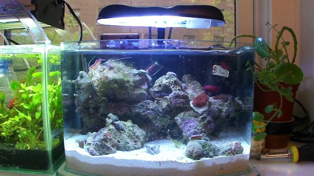 3 gallon picotope saltwater nano reef youtube for Starting a saltwater fish tank
