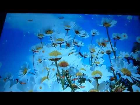 Ромашки летние цветы на Андроид