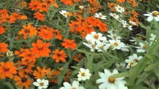松任谷由実氏作曲の「春よ、来い」をマンドリンオー ケストラに編曲しま...