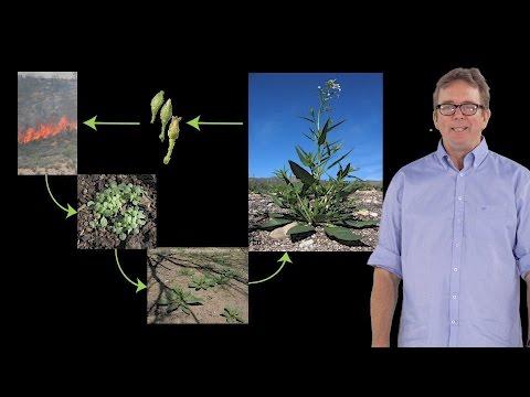 Семена чиа для похудения: состав, противопоказания, отзывы