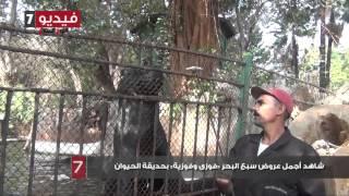 بالفيديو.. شاهد أجمل عروض سبع البحر «فوزى وفوزية» بحديقة الحيوان