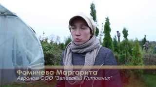 БАС ТВ Яблоневый сад в Полесске Калининградской области