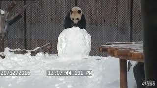VIDÉO - On a retrouvé Kung Fu Panda !