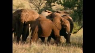 南アフリカの野生動物保護区を舞台に、絶滅の危機に瀕するアフリカ象を...