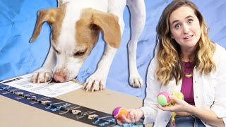 Dogs Unbox Amazon's Best-Selling Dog Toys