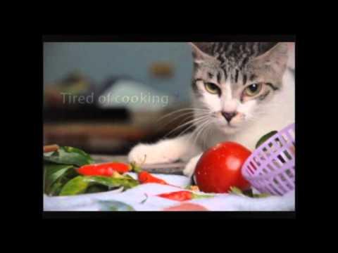 TVC - Whiskas - ^^~ bữa tối của mèo ú .