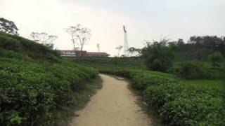 TEA ESTATE SYLHET