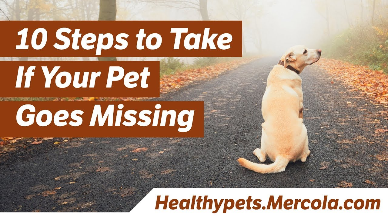 Every Missing Pet Poster Tells Story >> 10 Simple Steps To Find A Missing Pet