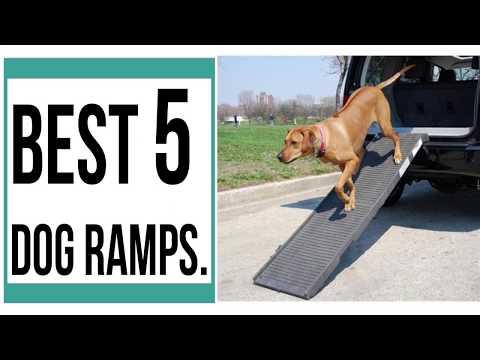 dog-ramps-||-best-5-dog-ramps-||-best-5-dog-ramps-2019