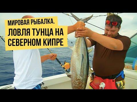 Как поймать тунца