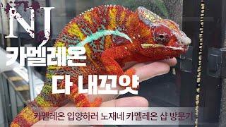 수백마리의 카멜레온이 한자리에 여기가 서울숲 ???? …