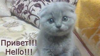 Смешная всеядная кошка (видео для хорошего настроения)