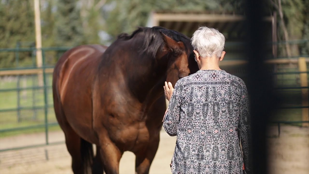 How to Explain Equine Facilitated Learning?