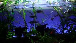 Бесшумный компрессор для аквариума(, 2017-02-09T15:08:33.000Z)