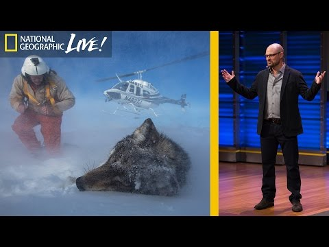 How Animals and Humans Clash and Coexist in Yellowstone | Nat Geo Live
