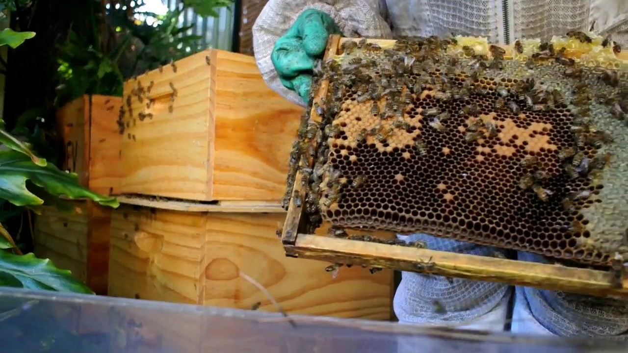 backyard beekeeping in australia youtube