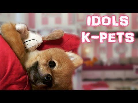 IDOLS CUTE PETS | K-POP